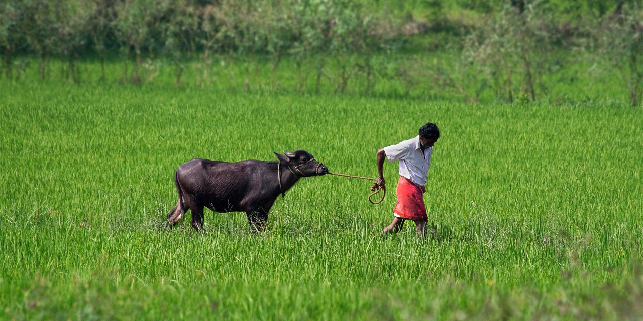 Farmers, Procurement and Agripreneurship in India
